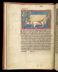 How To Capture An Antelope, In A Bestiary